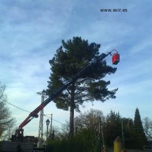 Realizando un tratamiento de procesionaria del pino