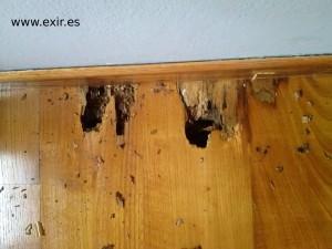 efectos de la termita en un suelo de madera