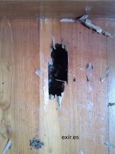 efectos de la termita en suelo de madera