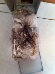 Cebo termita